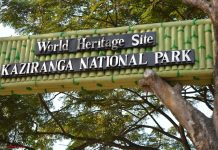Assam's Kaziranga National Park