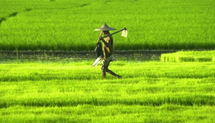 Budget 2018 Allocation for agri-research likely to go up 15%