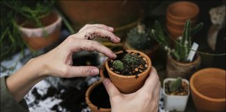 Dig your way to good health Gardening can help old people remain healthy