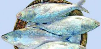 Fish containing omega-3 more effective in cancer prevention than flaxseeds
